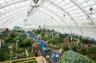 Horticulture / Everything related to the cultivation and propagation of plants.