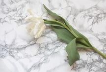 白い花 / 白い花を集めました。