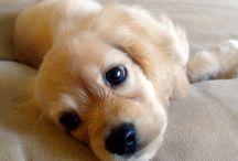 I NEED a puppy!