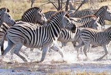 Botswana - Africa / Wild Luxury in Botswana
