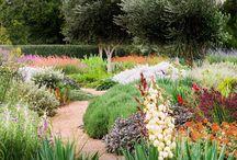 aussie native garden