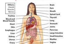 Autoimmune Diseases, e.g. MS, Arthritis,Diabetes.... / by Ina Burger