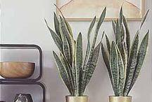 decoratie ideeën met planten