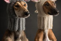 Hounds in hats