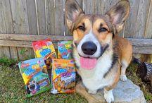 New Dog Edible Chews & Toys / New Dog Edible Chews & Toys from Nylabone #newnylabone #dogchews #dogtreats #dogtoys #nylabone / by Nylabone Products