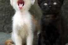 Kitties / by Hannah Pace
