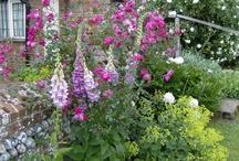 Garden: Kitchen garden/potager
