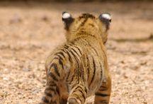 Cute animals / animals / by LIL LUNA