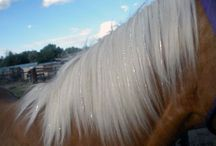 Cowgirl Glam