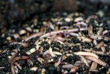 wormen  / wormen project ;p