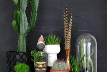 plantes de décoration interieur