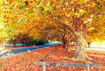 Tenterfield, NSW, Australia / Tenterfield is home and it is a land of four seasons.  The New England area of the Northern NSW tablelands is constantly changing.  It is a land of endless colour.