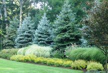 Древесно-кустарниковые композиции