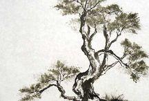 chinese brush p. puut
