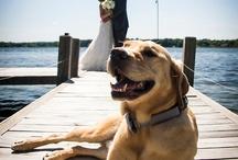 Hund & Hochzeit