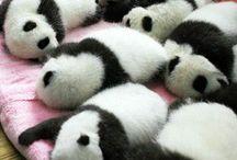 Animals baby