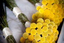 Craspedia bouquets