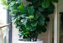 Pots & plants Flower arrangements