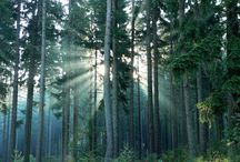 Forest - photo
