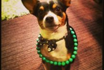 Tio-Pepe : Shop Dog