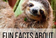 Sloths / Sloths