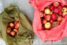 homemade cider / apple or pear cider