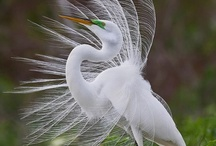 BIRDS / NO PIN LIMITS  =  IF YOU BLOCK ME I WILL BLOCK YOU