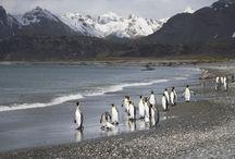 South Georgia / Wildlife and scenery of the Sub Antarctic Island of South Georgia
