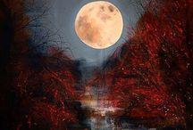 Willowwood : Photo