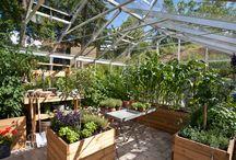 Trädgård / Garden, inspiration, trädgård, gardening