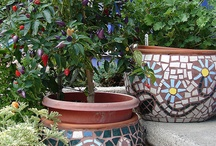 Fleurs en pots / Fleurs en pots