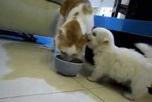 Dog - Videa