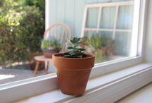 Propagating Succulents