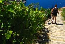Tempo libero in Liguria / Free Time in Liguria / Mare, mountain bike, moto trekking e molti altri... Sea, bike, moto, trekking and many more...