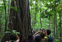 Tangkoko, where nature is reserved for your visit
