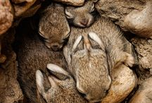 Rodentia/Lagomorpha / by Brittany Chase