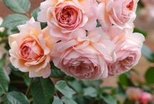 ღ Jardin de rosas ღ