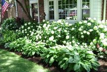 Outdoor Spaces / by Stephanie Whitlow