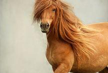 Horses :)  / by Carlie Boagni