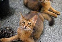 Kočky / kočky