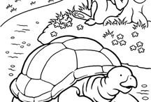 The tortoise and the hare/ Turtles