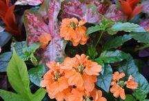 Brilliant Color In The Garden