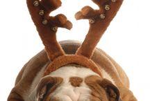 Dog Cat & co.