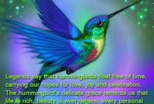 Hummingbirds / hummingbirds / by Tami Thompson