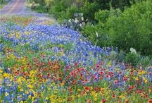 Springtime in Texas / Fun things to see and do in Austin this spring season!