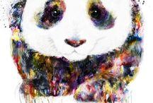My Panda Bae
