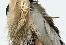 Beautiful birds / by Kathryn Forster