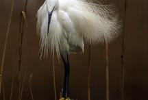Aves maravillosas / by El jardín de Noah de Rocío P.