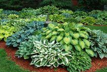 zelený záhon