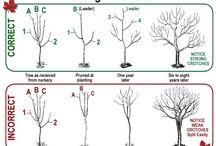 Copaci/arbori